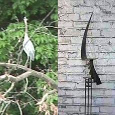 BIRD / STARHARP